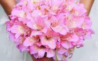 Почему флористы советуют выбрать свадебный букет из альстромерий и эустомы
