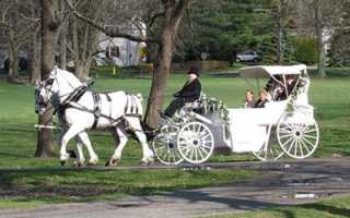 Карета на свадьбу – какую и как выбрать?