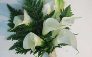Свадебный букет из калл — добавьте нежности в ваш образ